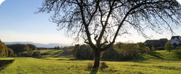 Baum mit Aussicht auf dem Rührberg