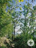 Buchswald