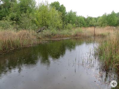 Biotop Kiesgrube Wyhlen