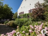 Zehnthaus mit Hortensien